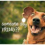 friday_funny_dog_meme